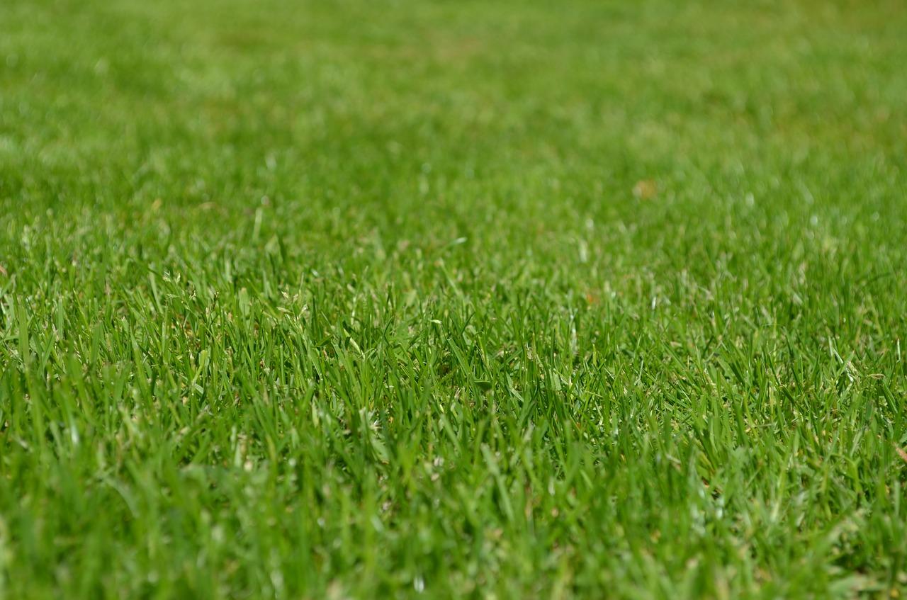 Trawnik po sezonie